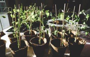 How to start this year's seedling crop