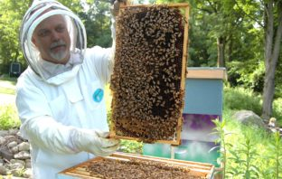Becoming a beekeeper on the homestead