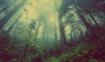 Survival tips when you're lost in the woods