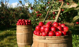 Simple steps to a healthier garden